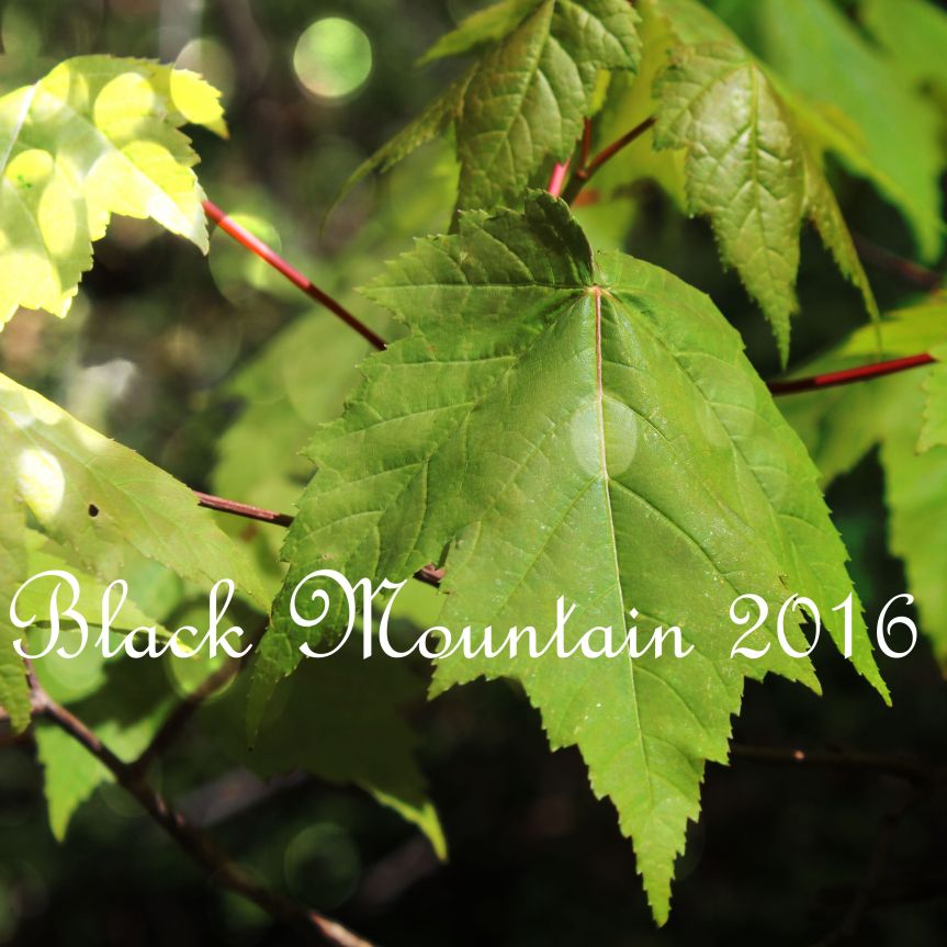 Black Moutain 2016